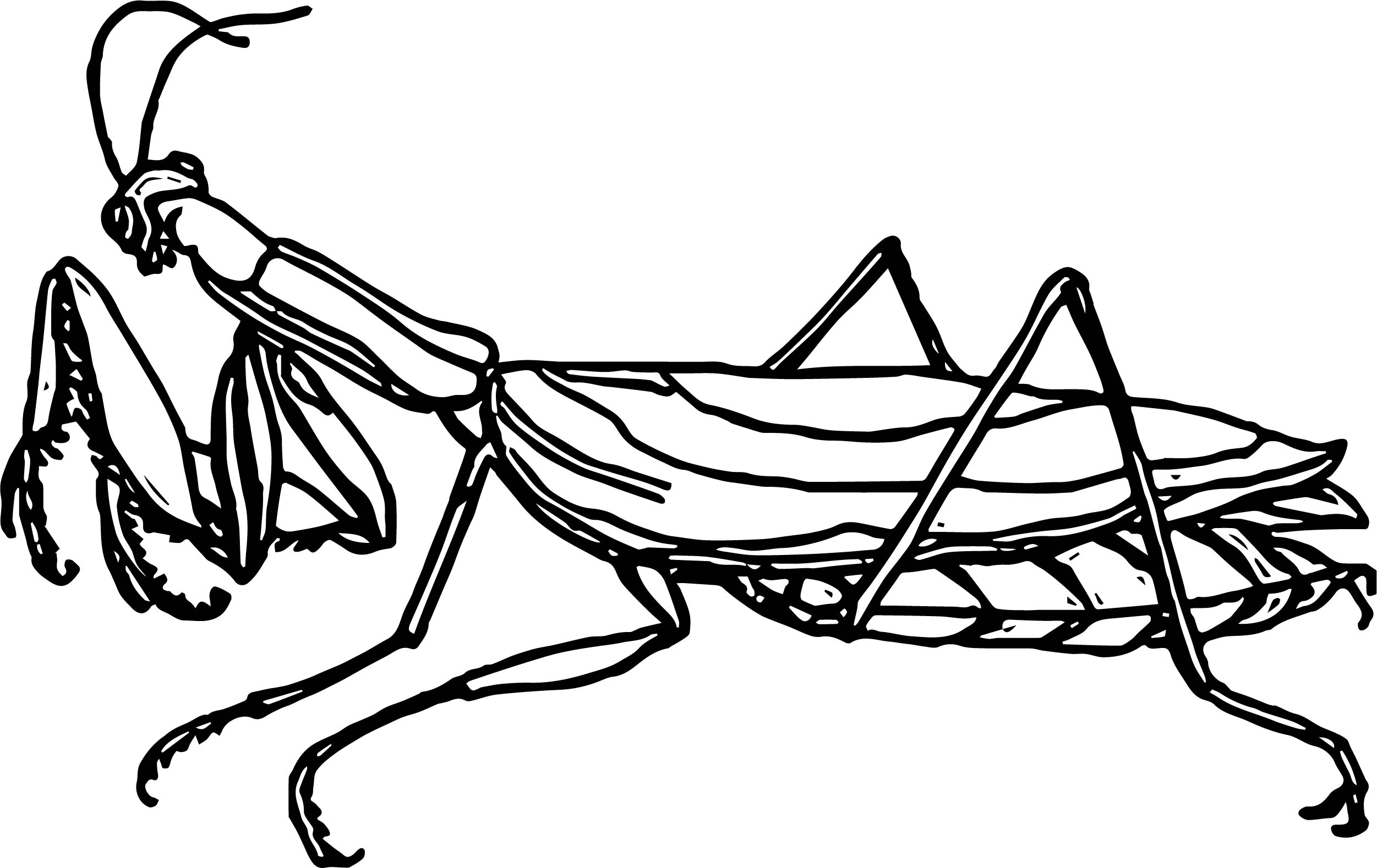praying mantis insect coloring page