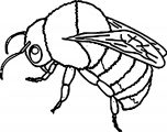 realistic bumble bee insect coloring page