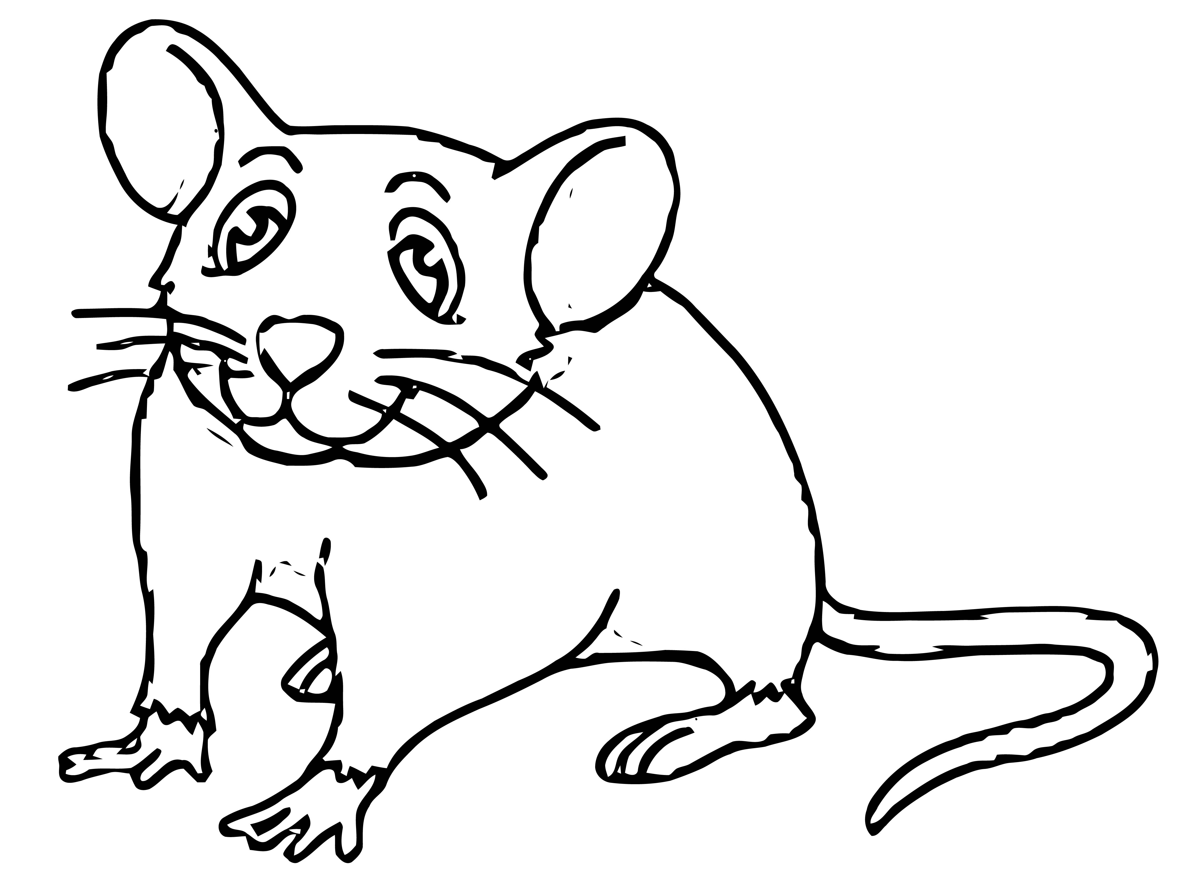 Mouse With Long Tail Coloring Page