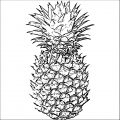 Pineapple Coloring Page WeColoringPage 13