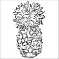 Pineapple Coloring Page WeColoringPage 19