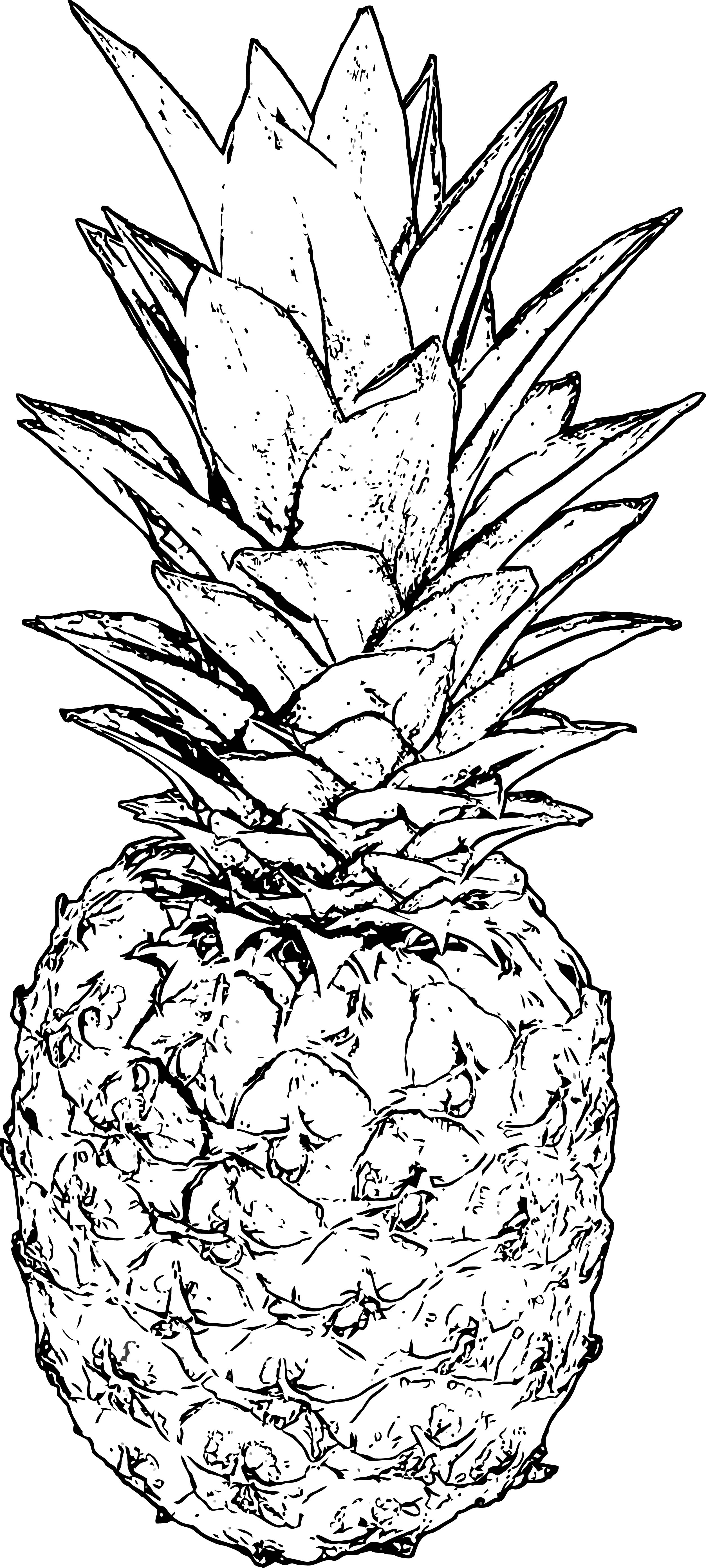 pineapple coloring page wecoloringpage 33  wecoloringpage