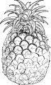 Pineapple Coloring Page WeColoringPage 41