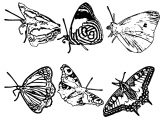 Butterfly Coloring Page Wecoloringpage (110)