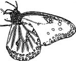 Butterfly Coloring Page Wecoloringpage (128)
