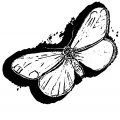 Butterfly Coloring Page Wecoloringpage (129)