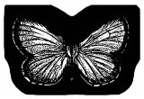 Butterfly Coloring Page Wecoloringpage (133)