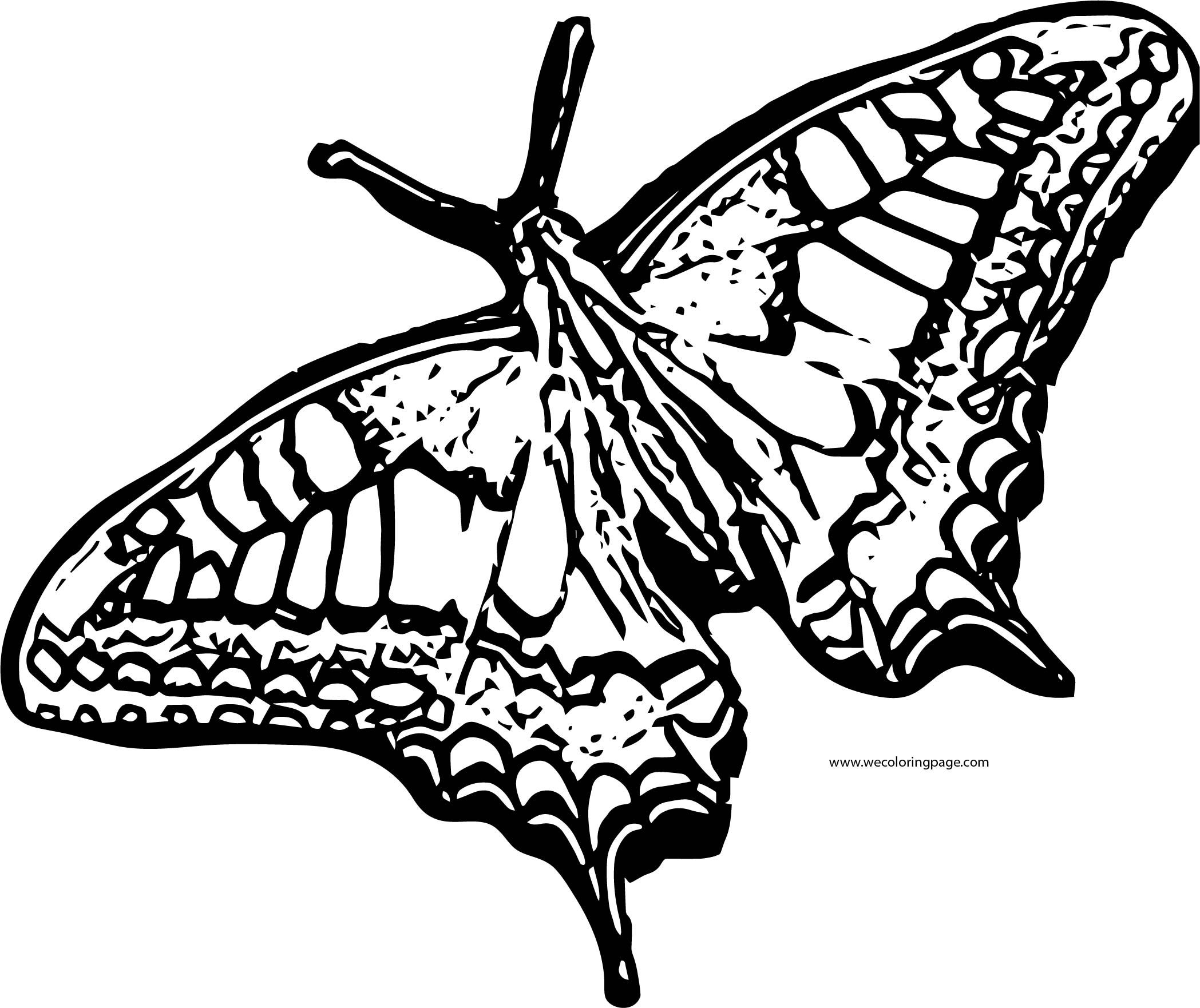 Butterfly Coloring Page Wecoloringpage 151