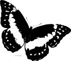 Butterfly Coloring Page Wecoloringpage 154