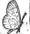 Butterfly Coloring Page Wecoloringpage (162)