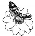 Butterfly Coloring Page Wecoloringpage (188)