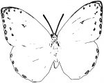 Butterfly Coloring Page Wecoloringpage (204)