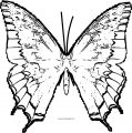 Butterfly Coloring Page Wecoloringpage 250
