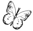 Butterfly Coloring Page Wecoloringpage 313
