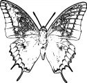 Butterfly Coloring Page Wecoloringpage 354