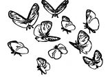 Butterfly Coloring Page Wecoloringpage 362
