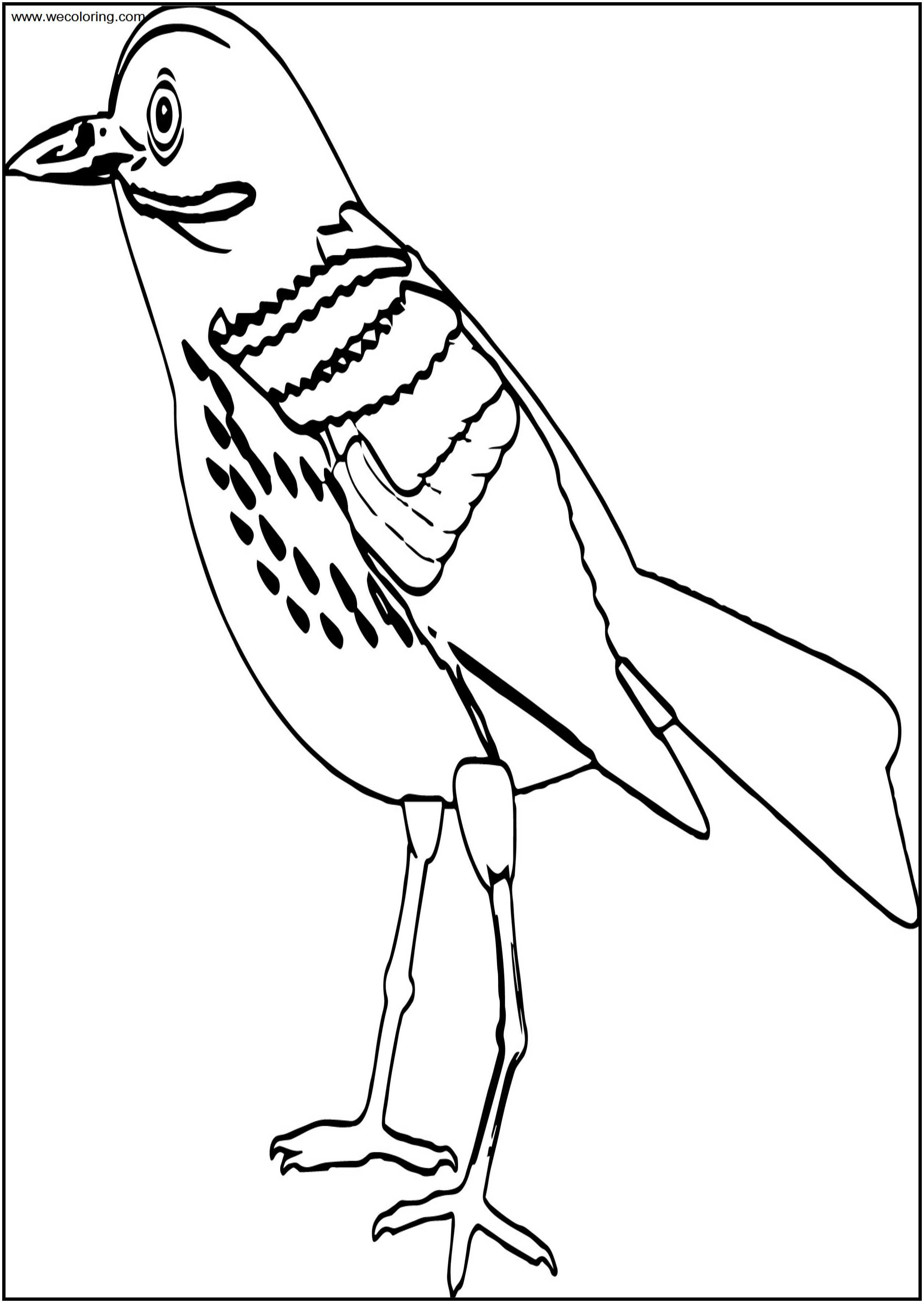 By Bird Free A4 Printable Coloring Page