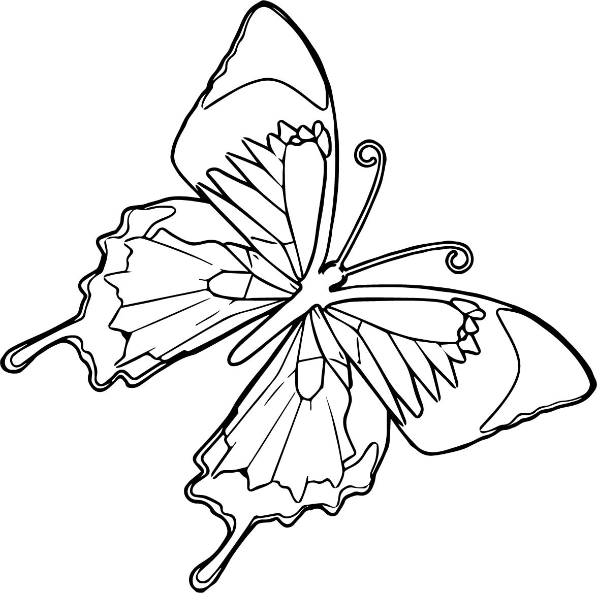 Flying Butterfly Coloring Page Download As Pdf