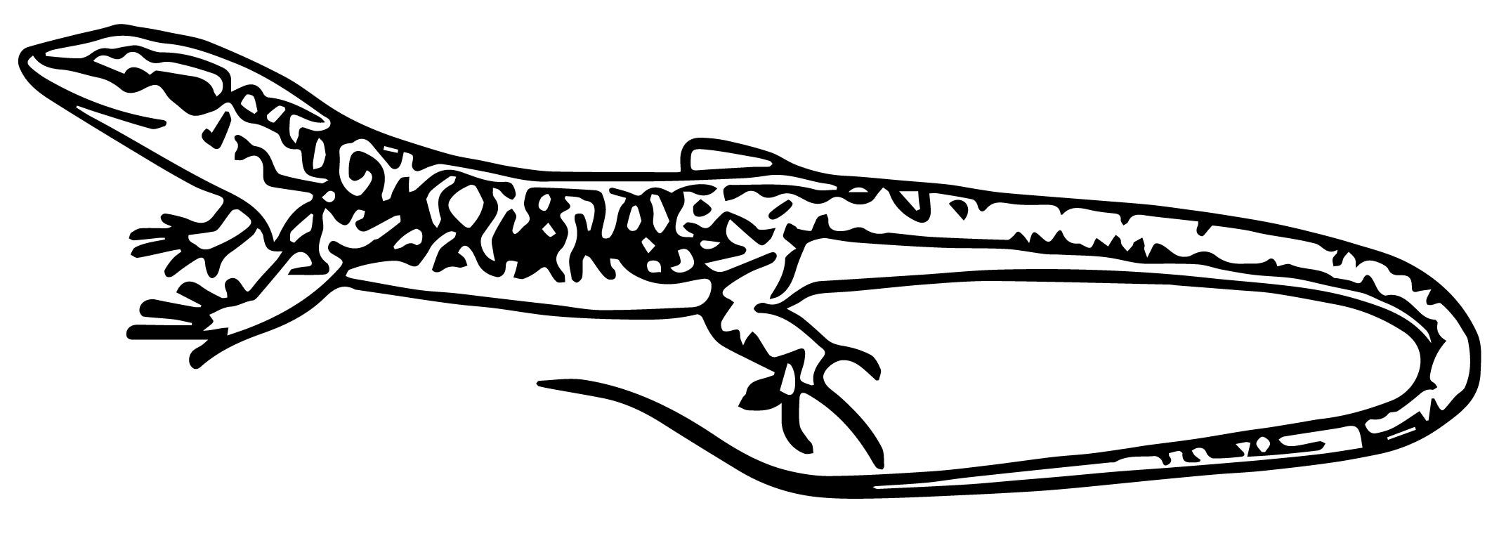Lizard Jpeg Coloring Page WeColoringPage 19