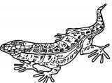 Lizard Jpeg Coloring Page WeColoringPage 31