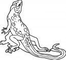 Lizard Jpeg Coloring Page WeColoringPage 34