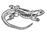 Lizard Jpeg Coloring Page WeColoringPage 35
