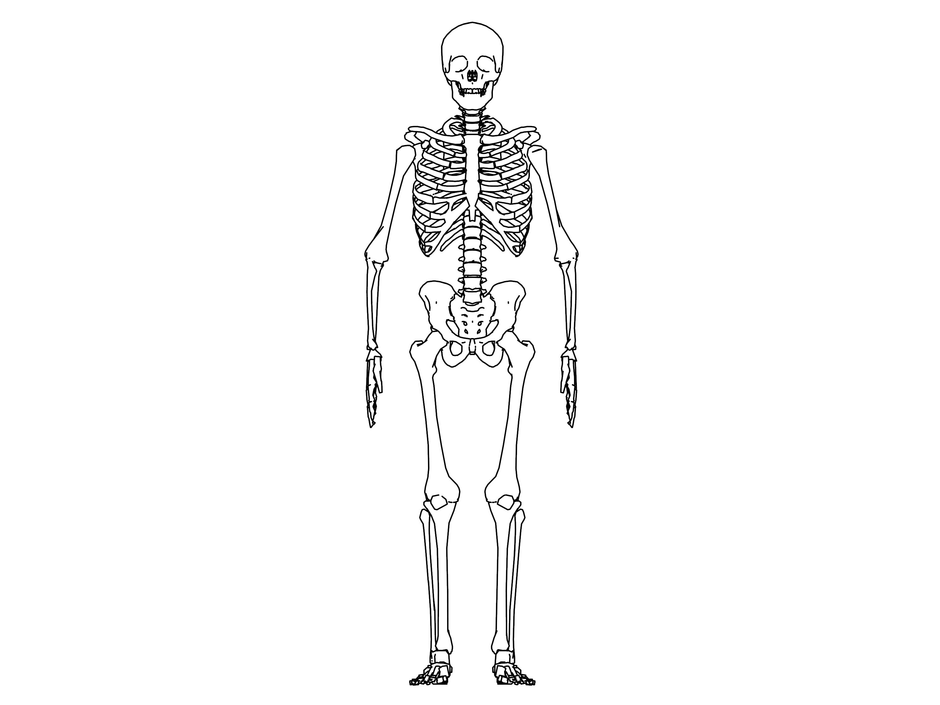 skeleton sketch drawing coloring page 02